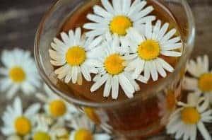 Цветы ромашки в бокале