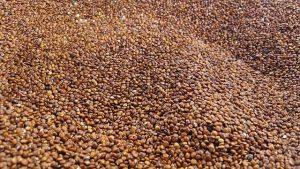 quinoa 2337621 640 300x169 1