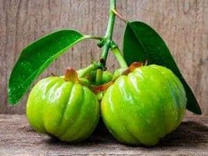 Garcinia Cambogia фрукт