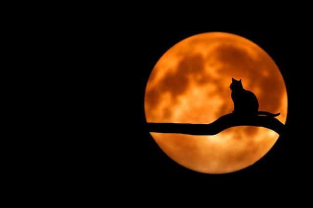 кошка ночью при лунном свете