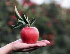 Яблоко, лежащее на ладони...