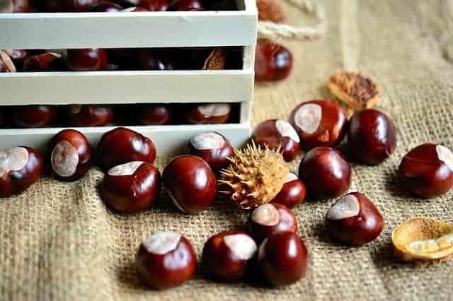 нераскатанный фрукт каштана
