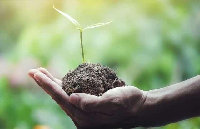 растение, держащееся на ладони.