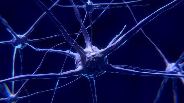 нейрон, нервная клетка