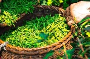 зеленый чай в корзине